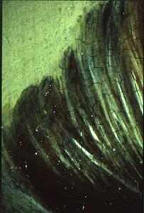 stereomicroscopie