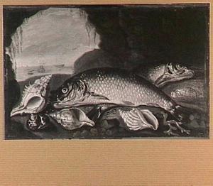 Visstilleven met schelpen in een grot