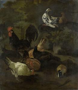 Een haan met kippen, duiven en een marmot