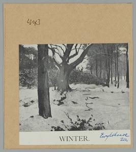 Boslandschap in de sneeuw