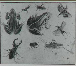 Kikkers en insecten