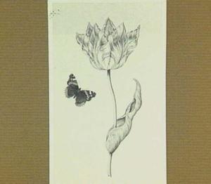 Tulp en admiraalsvlinder