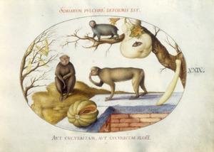Drie apen, een ribmeloen, kweepeer en een blazenstruik