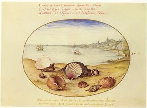 Schelpen op een oever, met in de achtergrond schepen en de stad Càdiz