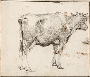 Schets van een staande koe