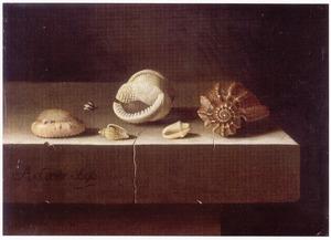 Stilleven met zes schelpen op een stenen tafel