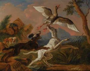 Honden jagen op een broedende eend