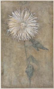 Upright chrysanthemum against a brownish ground