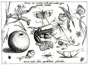 kikker en insecten, met een appel, aarbeien, bloemen en een slak
