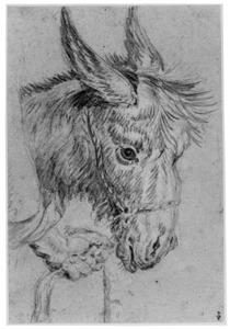 Kop van een ezel