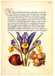 Spaanse lis, hazelnoot en tamme kastanje