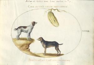 Twee honden en een kalebas
