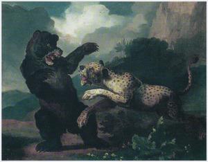 Een beer, aangevallen door een luipaard