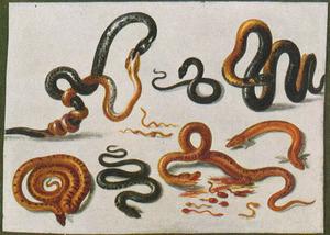 Studie van slangen op een witte ondergrond