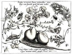 Twee paprika's, bloemen, insecten en een zeenaald