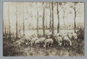 Komende schapen onder de bomen