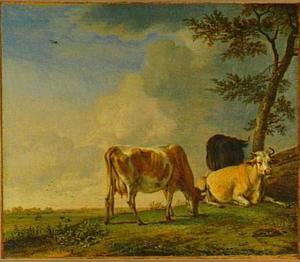 Drie koeien in een weiland bij een boom