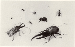 Tien insekten