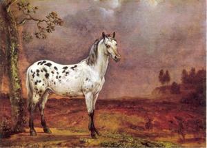 Bontgevlekt paard in een landschap