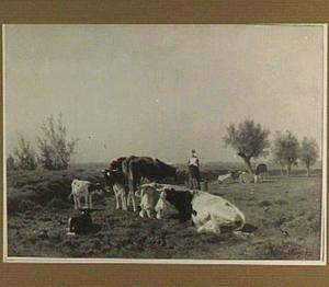 Koeien en boerin in een weide