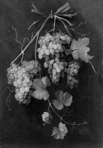 Festoen van een tak met trossen druiven