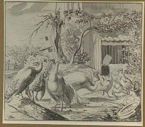 Boerenerf met pluimvee