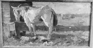 Paard aan een ruif