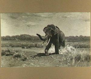 Indische olifant uit het water stappend