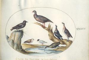 Zeven zangvogels
