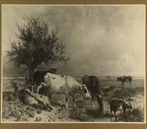 Koeien aan een poel bij Oosterbeek