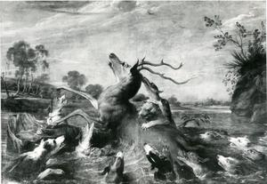 Honden vallen een damhert aan in het water