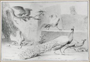 Pauwen en gevogelte