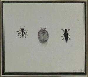 Drie insecten