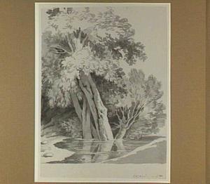 Bomengroep aan het water