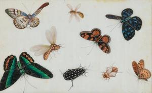 Studieblad van insecten