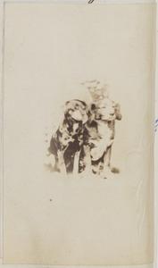 Portret van twee honden van familie Van Sminia