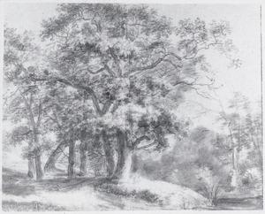 Pad langs een bosrand