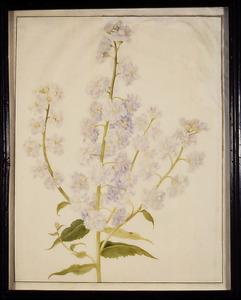Gevulde witte damastbloem