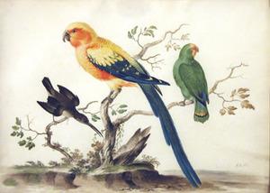 Drie vogels, waaronder een papegaai