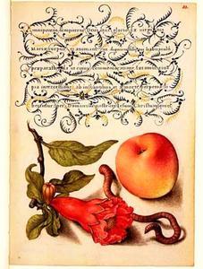 Granaatappelbloesem, perzik en regenworm