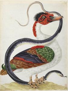 Muskuseend en slang, mogelijk een indigoslang