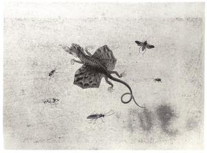 Vliegende hagedis en vijf andere insecten