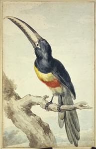 Zwartnekarassari