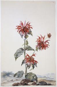 Rode bergamotplant in landschap