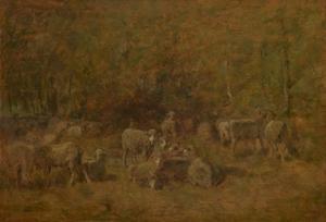 Kudde schapen in de bossen