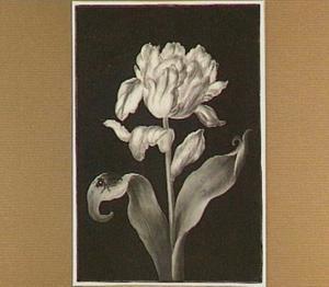 Bloeiende tulp met kever