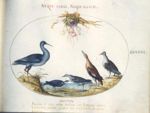 Vijf vogels onder een festoen van artisjok, koflook, uien en pastinaak