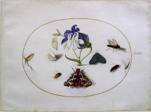 Akelei en acht insecten waaronder de grote beer