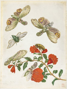 Granaatappelbloesem met lantaarndrager, reuzencicade en fabeldier