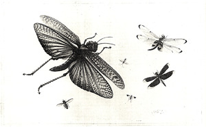 Zes insekten